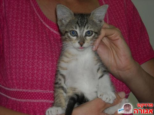 גורת חתול בת חודשיים
