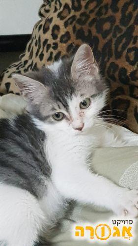 חתול קטנצ'יק שובב